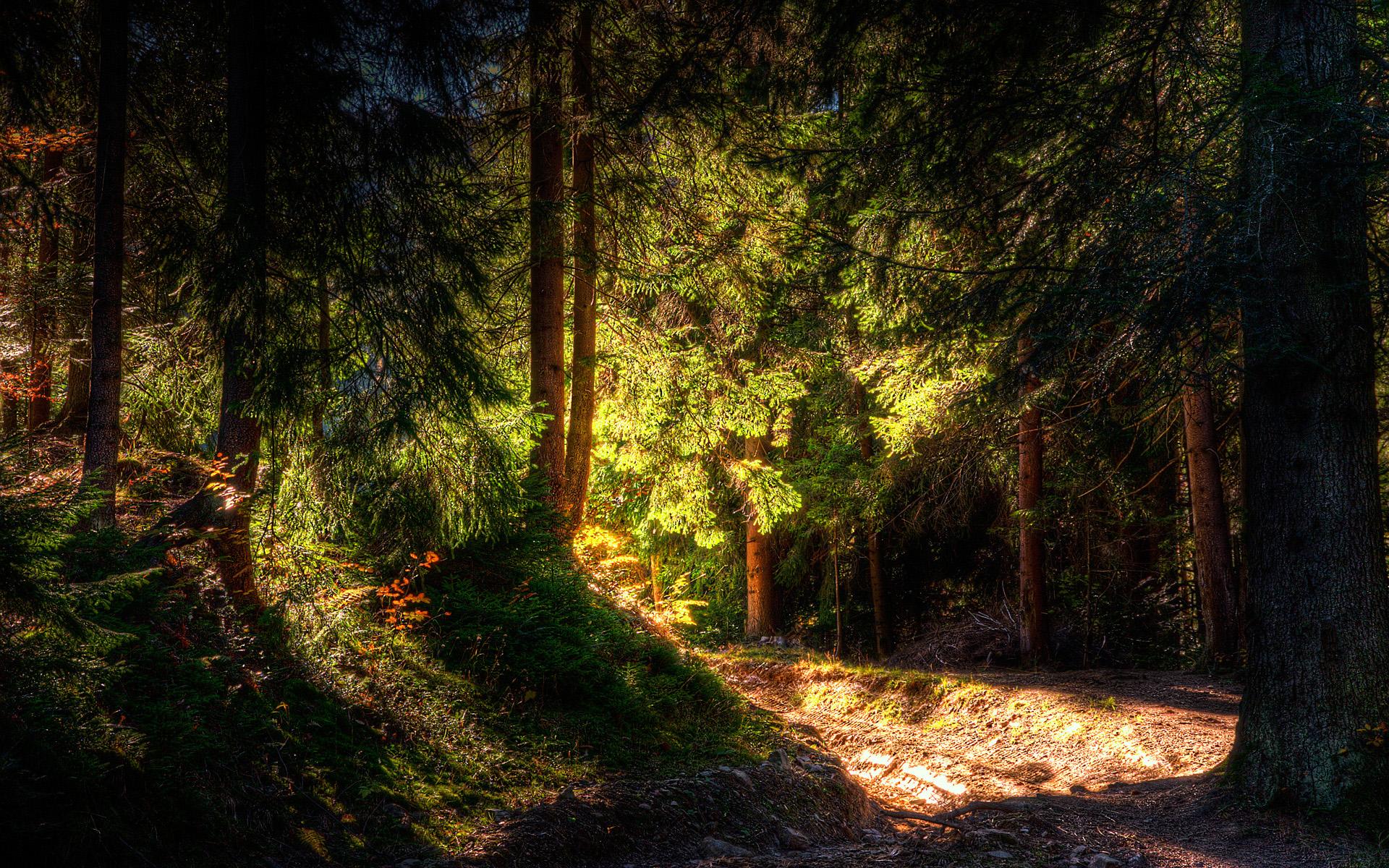 скачать фото леса качество